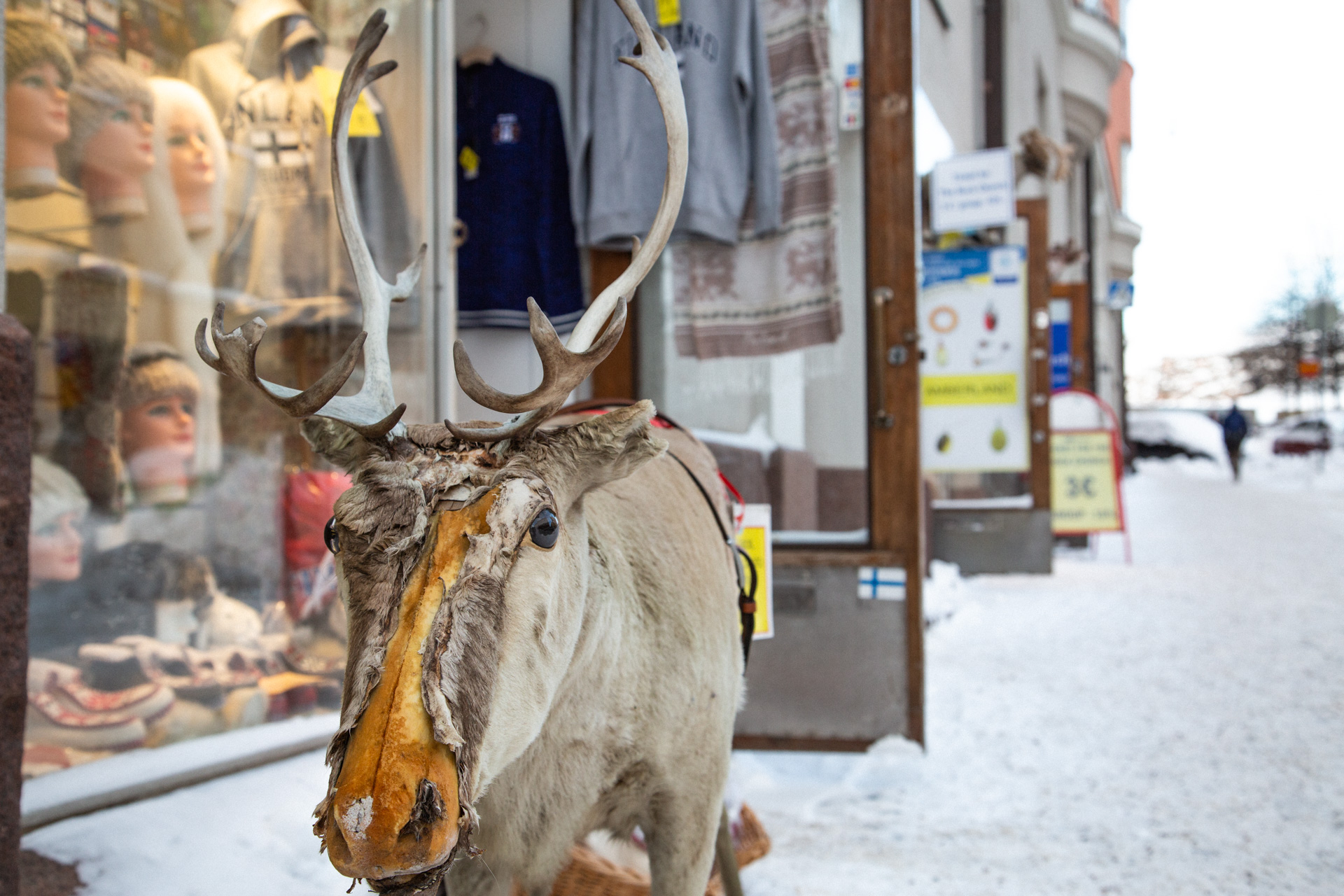 A stuffed reindeer in front of a souvenir shop in Helsinki.